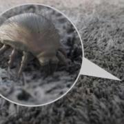Acari della polvere: cosa sono e come eliminarli