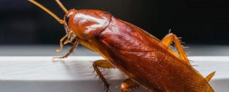 Eliminare gli scarafaggi in casa